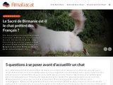 Amaliacat.com
