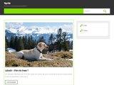 Top-pet.fr